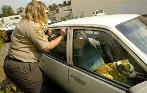 leaving in car text warning drivers about the dangers of leaving dogs in cars to be added to