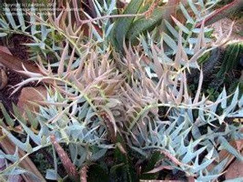 are succulents poisonous to dogs are succulents poisonous quora
