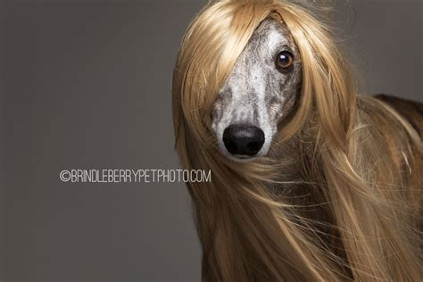 human hair dog cut pics dogs showcase the latest trends in human hair and we think