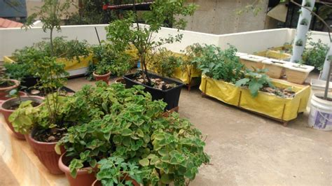 vegetable garden in balcony dubai best balcony design