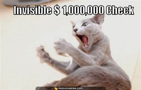 Invisible Cat Meme - cats doing invisible things