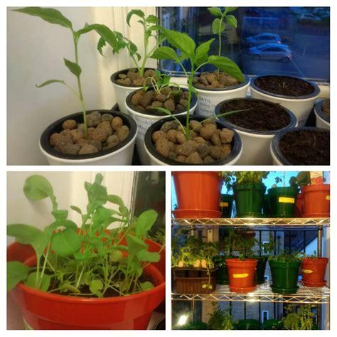 indoor herbal garden 100 indoor herbal garden diy herb garden in