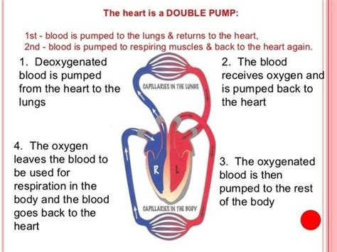 scow pump what is a double pump heart quora