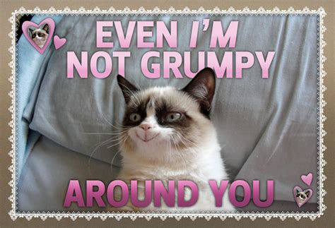 grumpy cat valentines day not so grumpy at all grumpy cat cat and memes