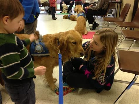why golden retrievers are the best eight reasons why golden retrievers are the best dogs odyssey