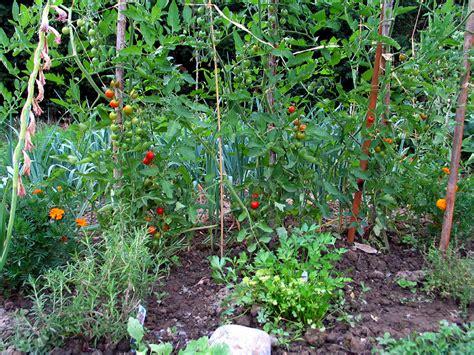 basic gardening tips home farmer