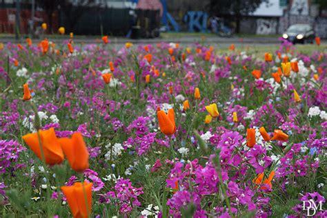 piante fiorite tutto l anno aiuole fiorite tutto l anno aiuole fiorite fai da te