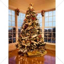 Modern Decorated Christmas Trees - beautiful xmas tree at dusk 183 gl stock images