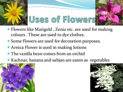 facts about flowers flowers ppt by aditya sharma