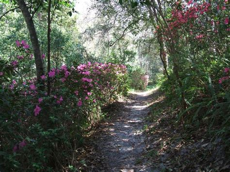Ravine Gardens Palatka Fl ravine gardens palatka fl neighborhood finds gardens the great outdoors and