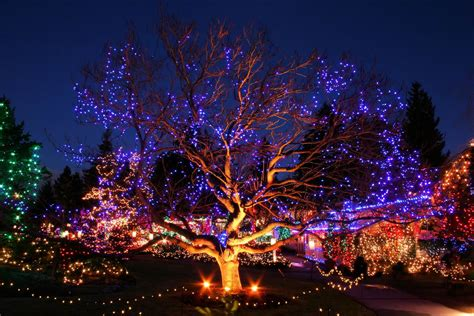 vandusen botanical garden festival of lights 6 family friendly new year s events in vancouver