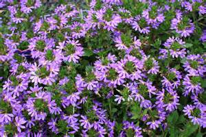 Flower Plants For Garden Attracting Butterflies To Your Garden Plant And Revegetation Specialists