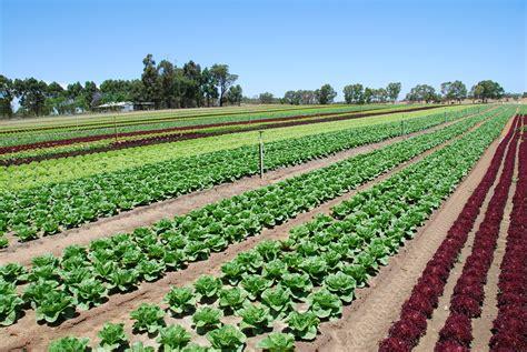 fertiliser calculator agriculture  food