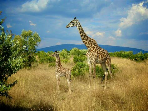 imagenes interesantes de africa 193 frica kevinsantiagoc