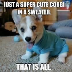 Corgi Meme - just a super cute corgi in a sweater that is all