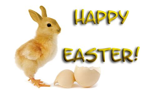 Witzige Osterhasen Bilder by Happy Easter Hd Wallpapers Free 9to5animations