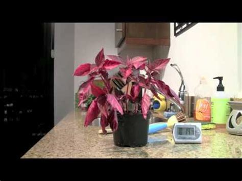 how to bring a dead plant back to life geeky how to bring back dead looking plants to life
