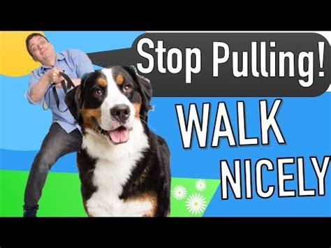 how to teach your puppy to walk on a leash how to your to listen to you in real vidoemo emotional unity