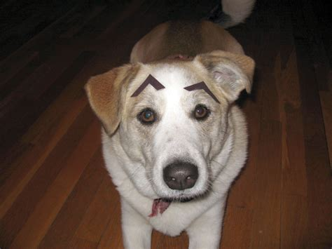 eyebrows on dogs 301 moved permanently