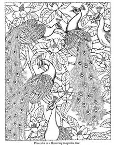 peacock coloring pages free coloring pages of peacock