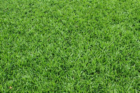 Green Grass by Green Grass Texture Texture Photo Background