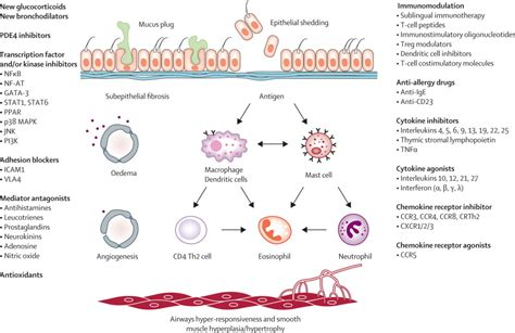 Dress Lipid new targets for development in asthma the lancet
