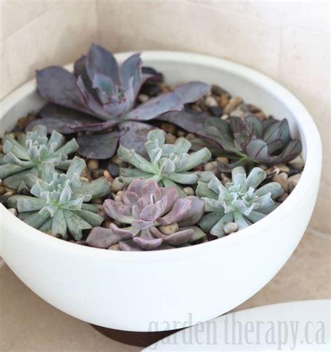 446 Best Indoor Living Spaces Images On Pinterest Home Indoor Succulent Planter