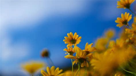 immagini sfondo fiori sfondi hd desktop fiori 86 immagini