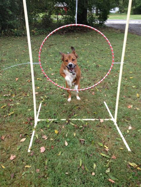 backyard dog best 25 dog playground ideas on pinterest dog backyard