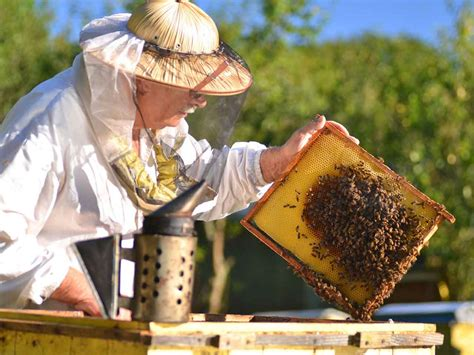 Bee Keeping By The Times Bee Keeper Beekeeping For Beginners How To Get Started Saga