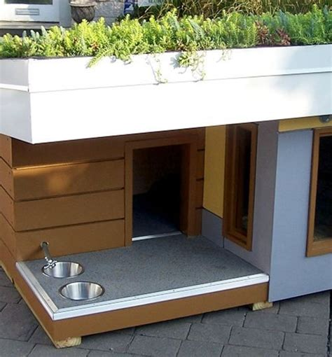 dog house with pool the gallery for gt cool dog houses with pool