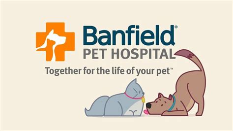 banfield puppy plan 324 best images about mascotas on poodles yorkie and spaniels