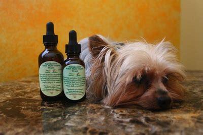 yorkie hypoglycemia yorkie hypoglycemia relief multivitamin drops organic hypoglycemia supplement