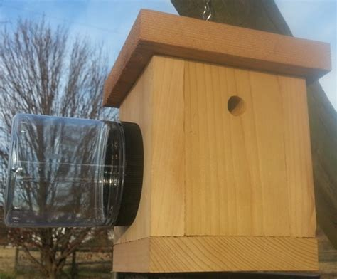 carpenter bee house bird houses by carpenter bee trap