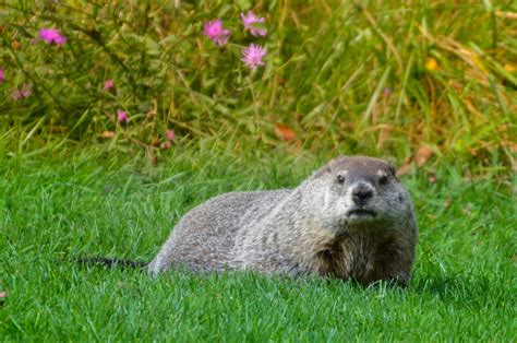 groundhog day uk groundhog day is the government white paper on trade and