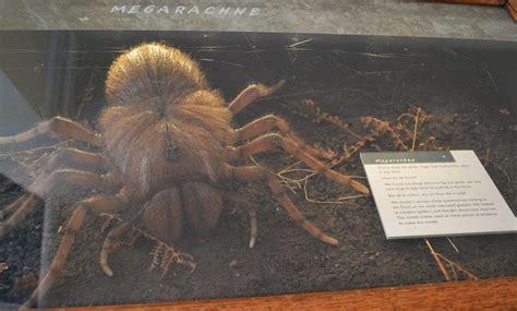 largest spider    inches  diameter    big spider dinosaur home