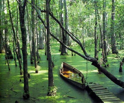 reelfoot lake boat rental 17 best images about reelfoot lake tn on pinterest