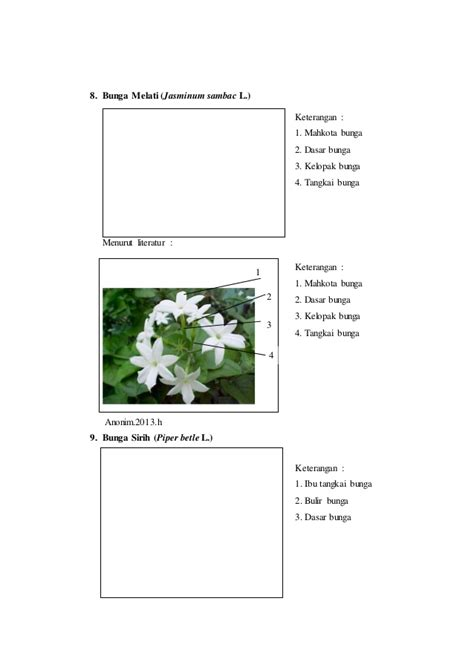 Collection of laporan praktikum 7 rumus bunga dan diagram bunga diagram dan rumus bunga melati image collections how to ccuart Gallery