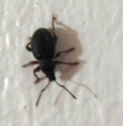 kleine schwarze käfer im bett badezimmer kleine k 228 fer badezimmer kleine k 228 fer