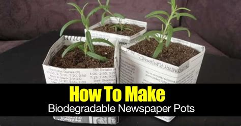 biodegradable plant pots growing containers for plants how to make biodegradable newspaper pots