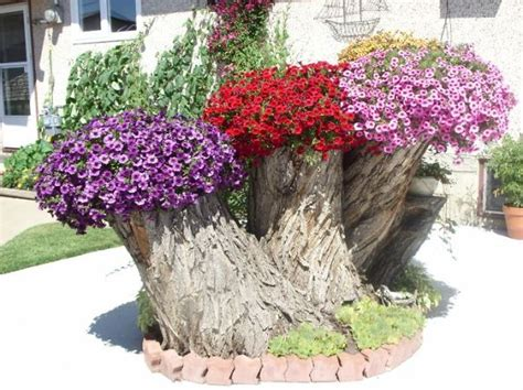 Beautiful Planters by 12 Tree Stumps Turned Into Beautiful Flower Planters