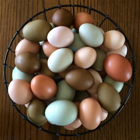 egg colors chickens that lay colored eggs purina animal nutrition