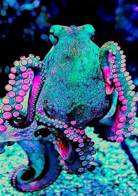 colorful octopus colorful octopus digital by michael todd