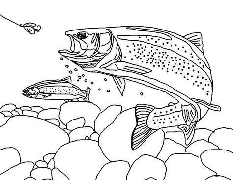 trout fish coloring page coloring page world rainbow trout free coloring pages