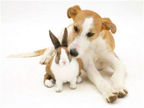 bunny puppy rabbits look like puppies and kittens on easter