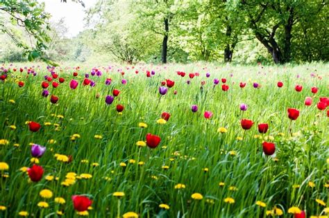 Beautiful House Plans by A Beautiful Meadow With Trees And Blooming Tulips In The