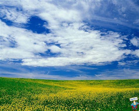 foto prati fioriti sfondi desktop prati fioriti 42 in alta definizione hd