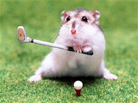 hamster swing hamster on pinterest hamsters baby hamster and hamster
