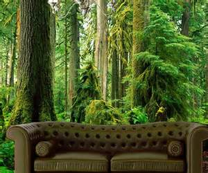 rainforest wall mural images pics photos tropical rainforest mural rens wall murals