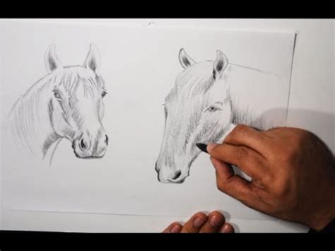 imagenes hechas a lapiz de animales dibujos a lapiz de animales boceto de caballos youtube